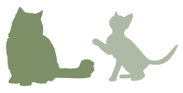 CHATS-les-jardins-de-berlioz-tendres-molosses-elevage-chats-chiens-lof-loof-persan-selkirk-rex-exotic-shorthair-bulldog-francais-chihuahua-gard-herault-blauzac
