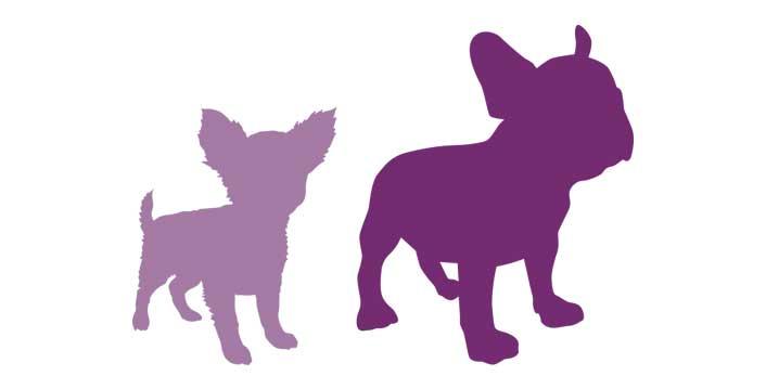 CHIENS-les-jardins-de-berlioz-tendres-molosses-elevage-chats-chiens-lof-loof-persan-selkirk-rex-exotic-shorthair-bulldog-francais-chihuahua-gard-herault-blauzac